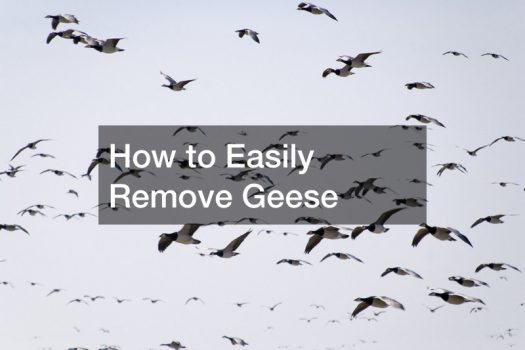 How to Easily Remove Geese